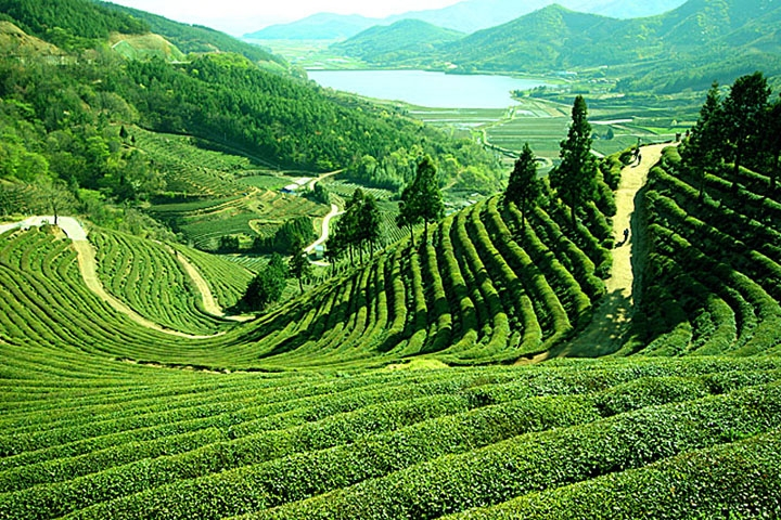 Darjeeling,IHO,Enchanting Green Hills Tour,North East India Holiday