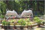 Botanical Gardens Pondicherry, Enchanting South India Tour, Indian Holiday Optio
